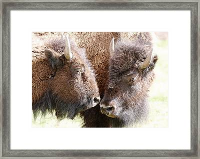 Buffalo Heads Framed Print by Athena Mckinzie
