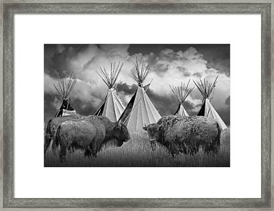 Buffalo Herd Among Teepees Of The Blackfoot Tribe Framed Print