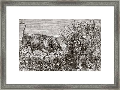 Buffalo Hunting In Africa In The 1860 Framed Print