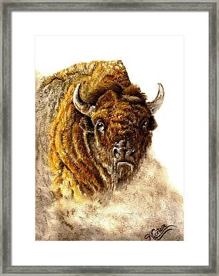 Buffalo Framed Print by Karen Cortese