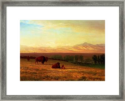 Buffalo On The Plains Framed Print by Albert Bierstadt