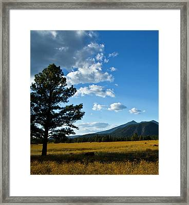 Framed Print featuring the photograph Buffalo Park 3 by Tom Kelly