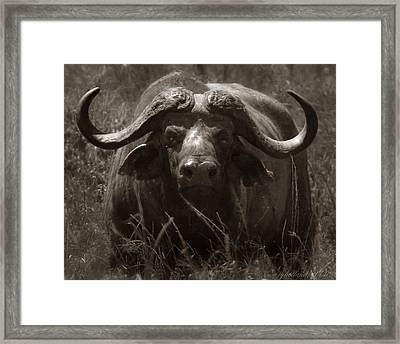 Buffalo Road Block Framed Print