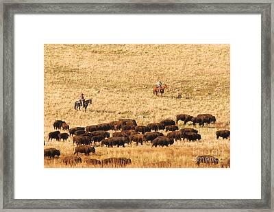 Buffalo Roundup Framed Print by Dennis Hammer