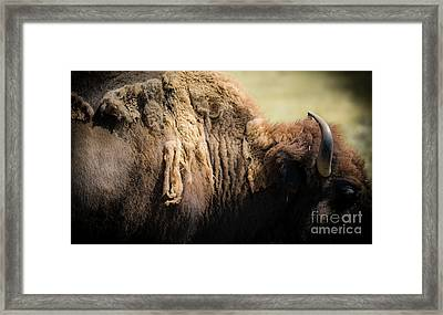 Framed Print featuring the photograph Buffalo Shed by The Forests Edge Photography - Diane Sandoval