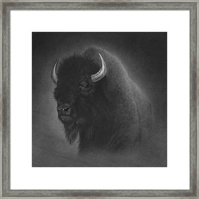 Buffalo Framed Print by Tim Dangaran