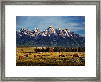 Buffalo Under Tetons 2 Framed Print by Leland D Howard