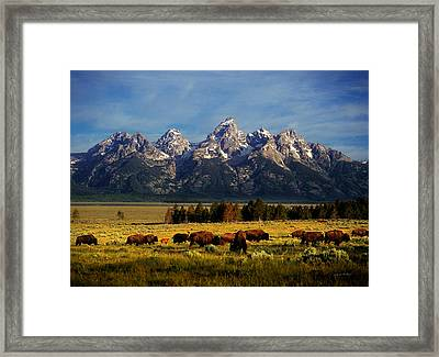 Buffalo Under Tetons Framed Print by Leland D Howard