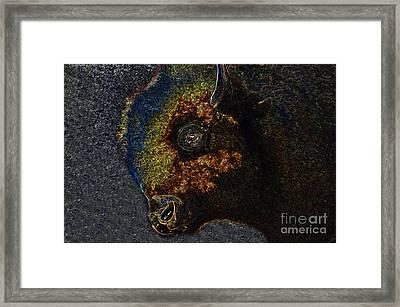 Buffalo Vision Framed Print by David Lee Thompson