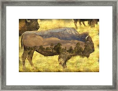 Buffalo Sand Dunes Framed Print