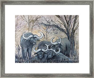 Buffaloes In The Bushveld Framed Print