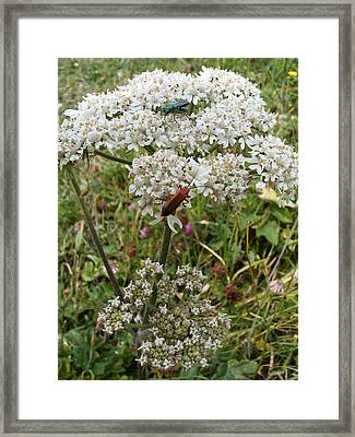 Bug Framed Print by Deborah Brewer