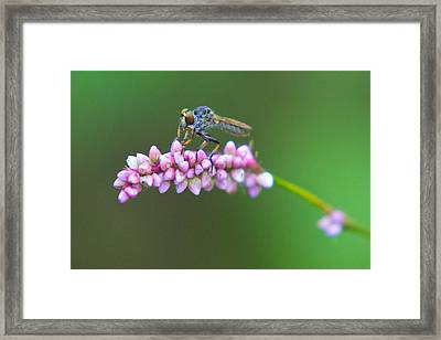 Bug Eyed Framed Print