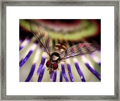 Bug Eyed Framed Print