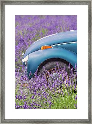 Framed Print featuring the photograph Bug In Lavender Field by Patricia Davidson