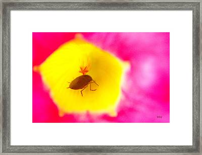 Framed Print featuring the photograph Bug In Pink And Yellow Flower  by Ben and Raisa Gertsberg