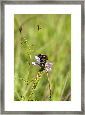 Bug On A Flower 8167 Framed Print