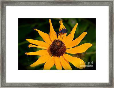 Bug On A Flower Framed Print by Sherri Williams