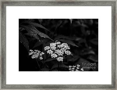 Bug On Flowers Black And White Framed Print