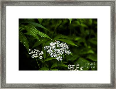 Bug On Flowers Framed Print