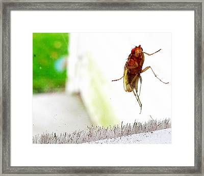 Bug On Window Framed Print