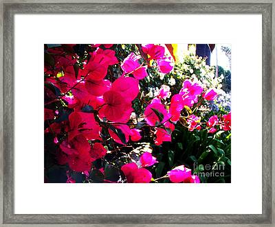 Framed Print featuring the photograph Bugambilia by Vanessa Palomino