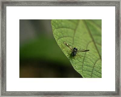 Bugeyed Fly Framed Print by Douglas Barnett