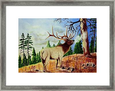 Bugling Elk Framed Print