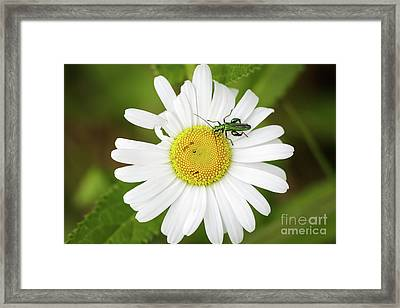 Framed Print featuring the photograph Bugs Life by Paul Farnfield