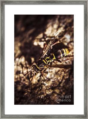 Bugs Life Framed Print