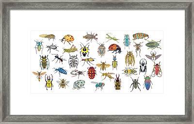 Bugs Framed Print