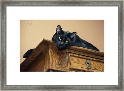 Bugzy Watching From On High Framed Print by Karen Slagle