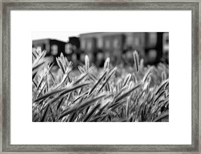 Buildings Are Growing Behind The Grass Framed Print