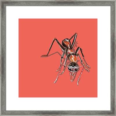 Bull Ant Framed Print