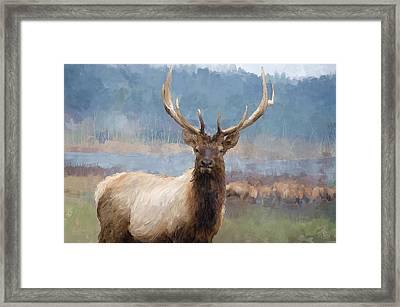 Bull Elk By The River Framed Print