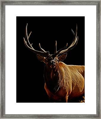 Bull Elk Digital Art Framed Print by Ernie Echols