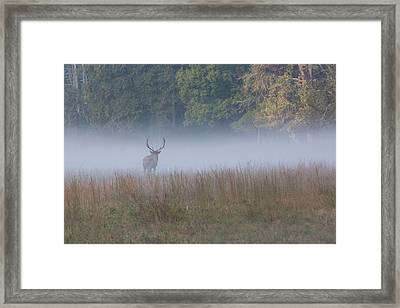 Bull Elk Disappearing In Fog - September 30 2016 Framed Print