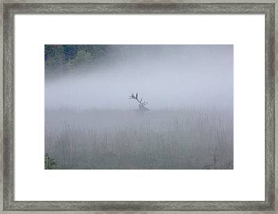 Bull Elk In Fog - September 30, 2016 Framed Print