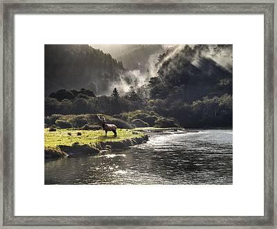 Bull Elk In Wilderness Framed Print by Leland D Howard
