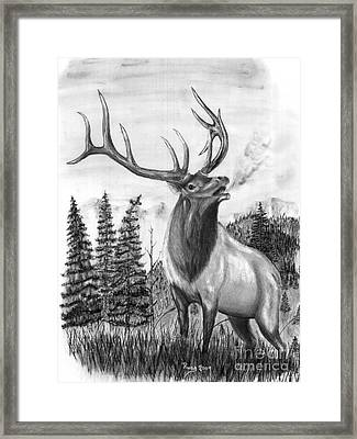 Bull Elk Issuing Challenge Framed Print by Russ  Smith