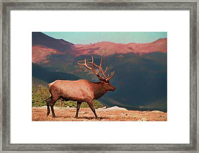 Bull Elk On Trail Ridge Road Framed Print by Dan Sproul
