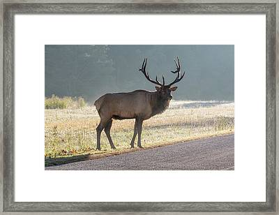 Bull Elk Watching Framed Print
