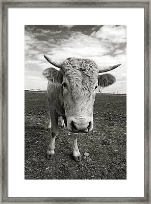 Bull Framed Print by Jimmy Bruch