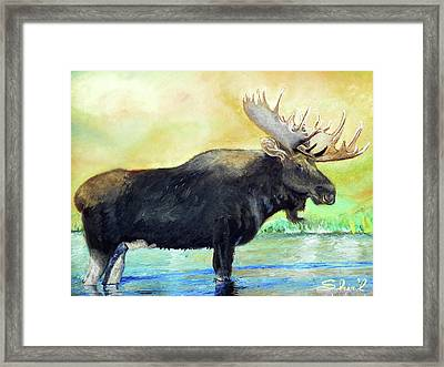 Bull Moose In Mid Stream Framed Print