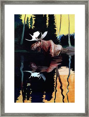 Bull Moose Framed Print by Robert Wesley Amick