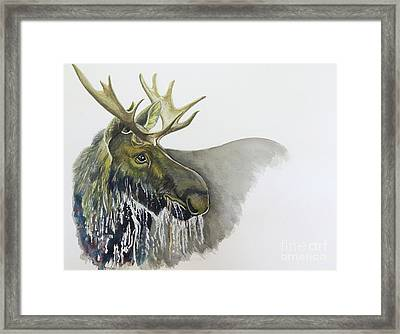 Bull Moose Watercolor Framed Print by Tracey Hunnewell