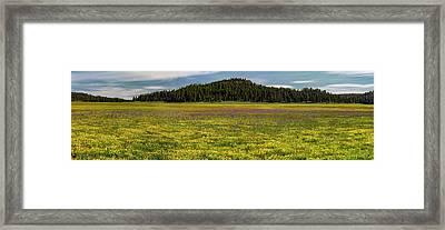 Bull Prairie Framed Print by Leland D Howard