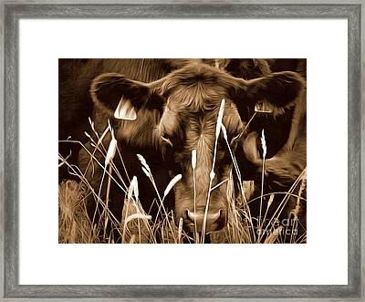 Bull - Sepia Brown Black Angus Framed Print