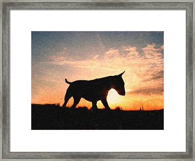Bull Terrier At Sunset Framed Print