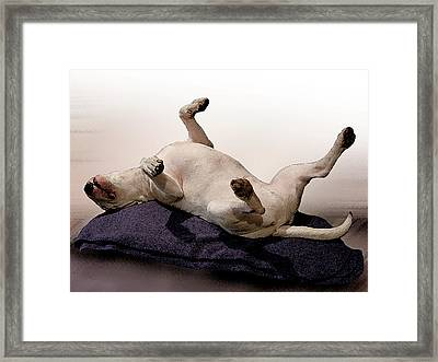 Bull Terrier Dreams Framed Print